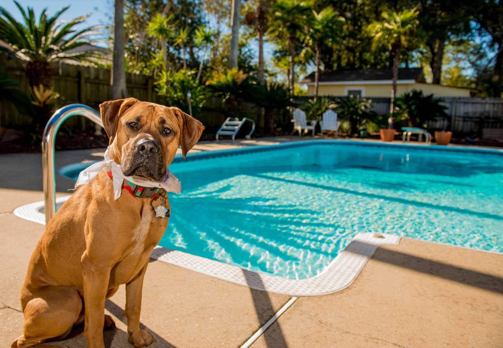 Rollo-Solar Schwimmbadabdeckungen - Hund